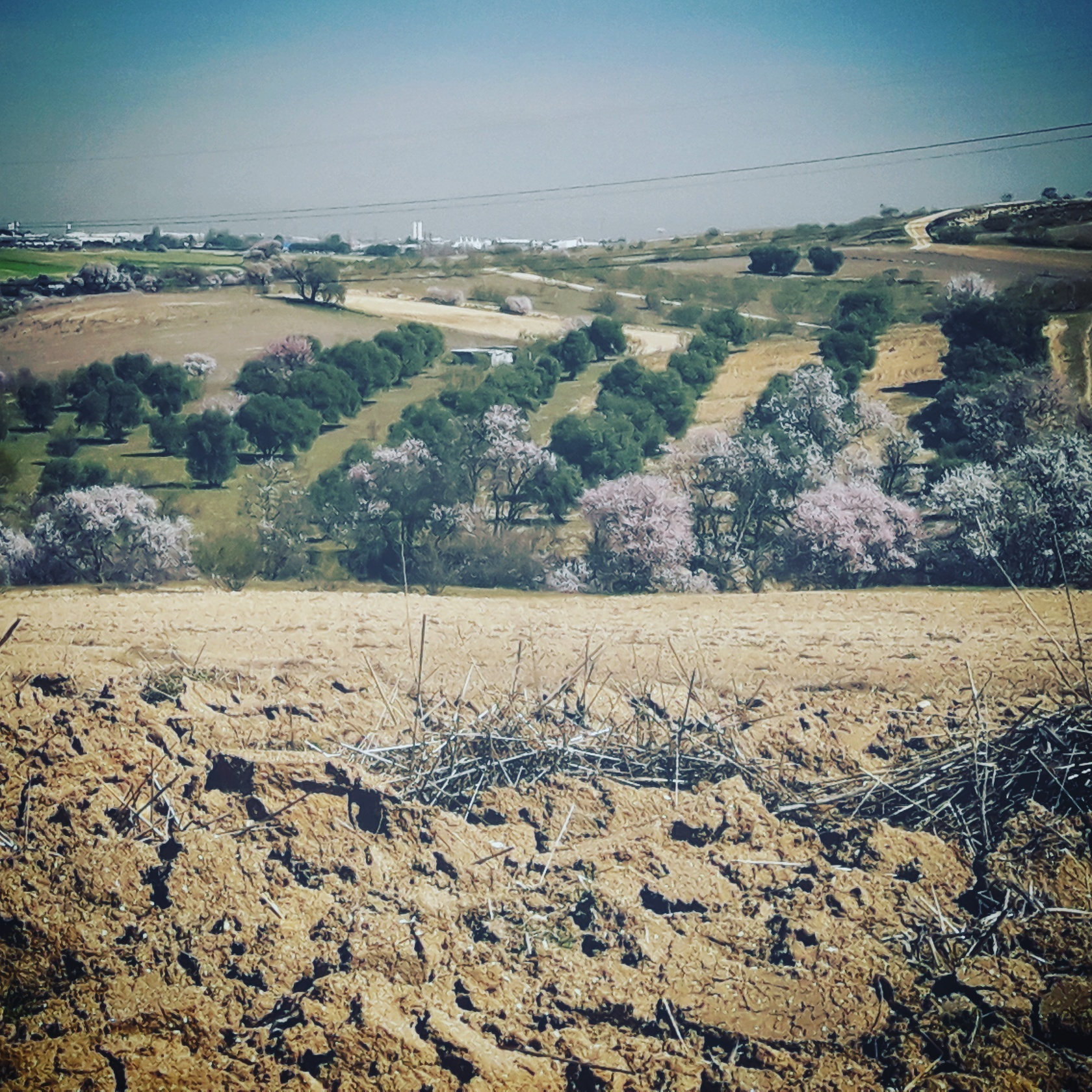 Castañeos-de-primavera
