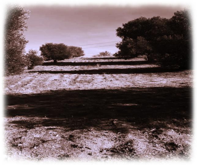 Coto Privado y olivos